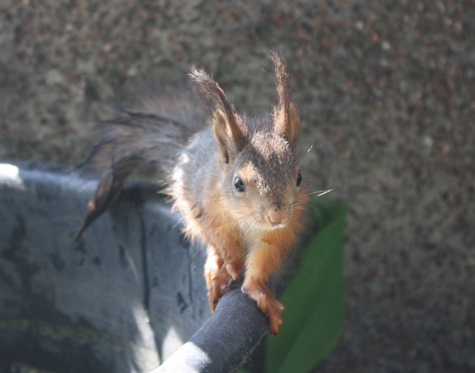 Orava Välikatossa