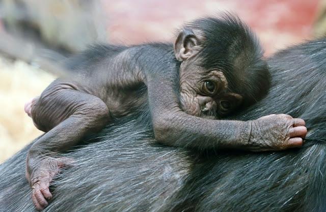 O que fazer no Zoológico de Los Angeles na Califórnia