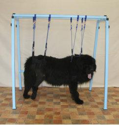 cães com paralisia