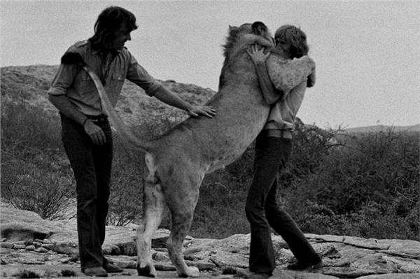ლომი სახელად ქრისტიანი