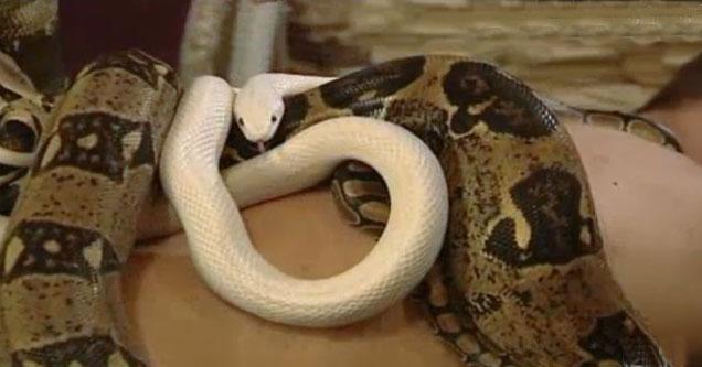 Amazing World Bizarre Israeli Snake Massage Spa