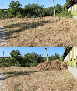 Before and after clearing the first part of the field
