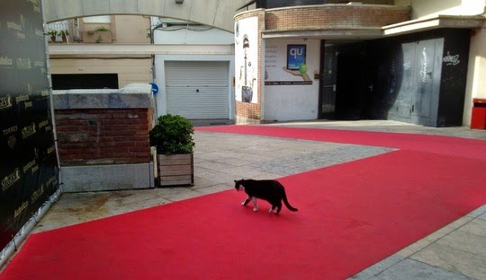 cat on the red carpet