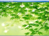 Cara Menambahkan Background Image pada JPanel di Java Swing
