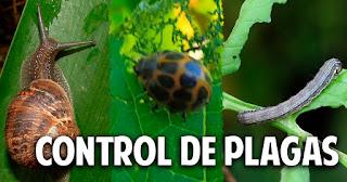 Quién se come mis plantas - Guía para controlar las plagas mas comunes del huerto - 1