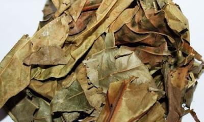 manfaat daun sukun kering bagi kesehatan