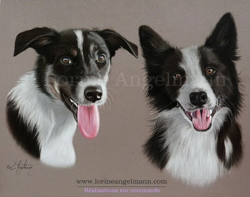 11-Dogs-Lorine-Angelmann-Cool-Realistic-Animal-Drawings-www-designstack-co
