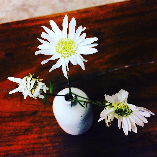 Hình ảnh hoa cúc họa mi đẹp dịu dàng vào ngày đầu đông
