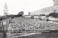 Vegetable crops on side of Male Division, Boggo Road Gaol, Brisbane, c.1915.
