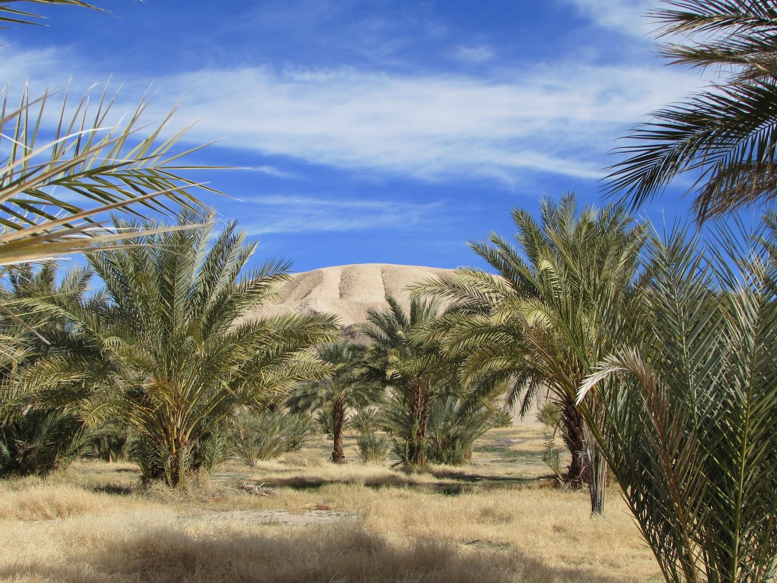 paseando por las palmeras de datiles china ranch