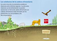 http://www.primaria.librosvivos.net/archivosCMS/3/3/16/usuarios/103294/9/eslabones_cadenalimentaria_cono5EP_ud5/cadena_alimentaria.swf