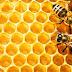 Όσα πρέπει να γνωρίζετε για τις μελισσοτροφές