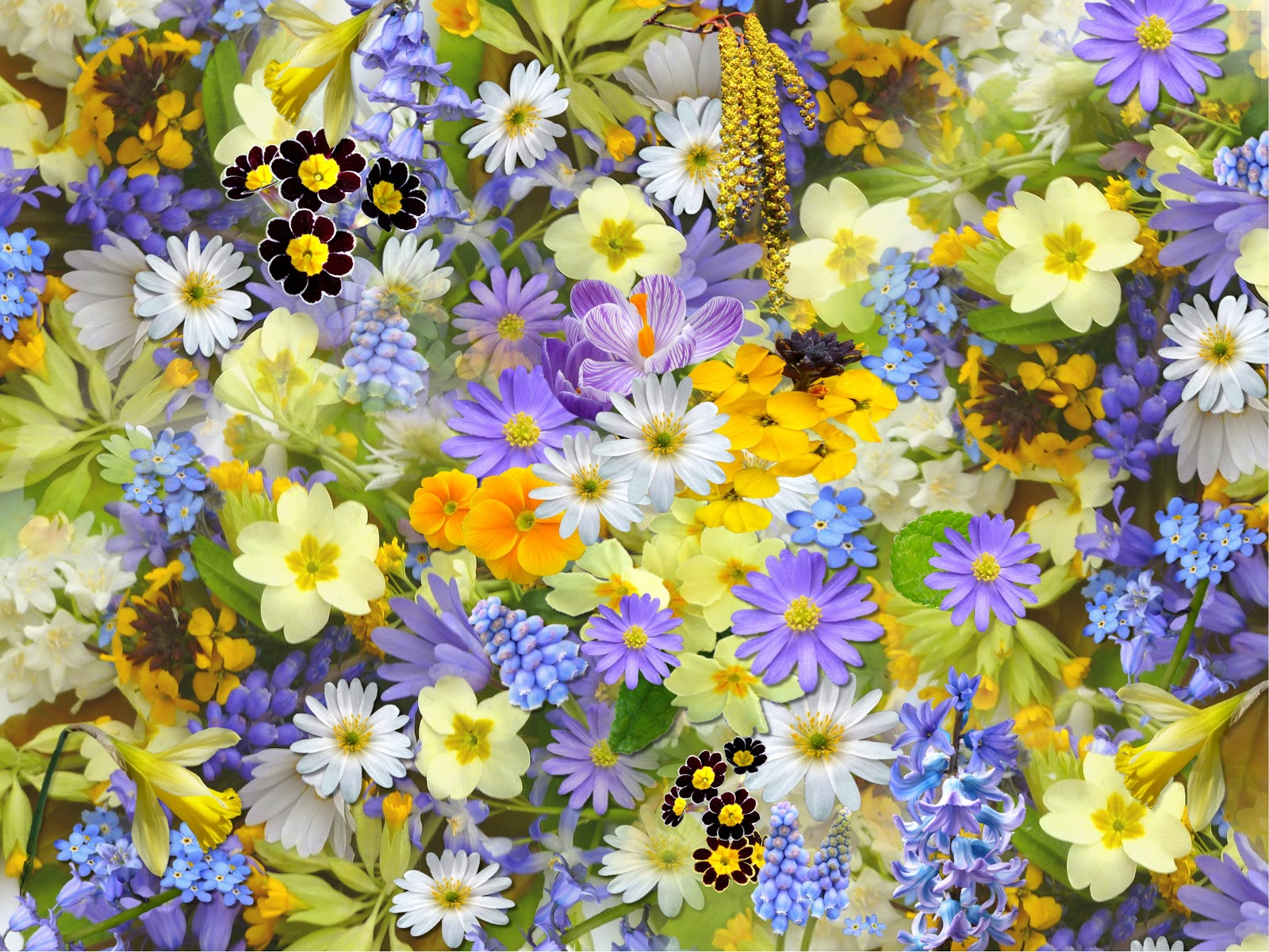 Bed of Flowers