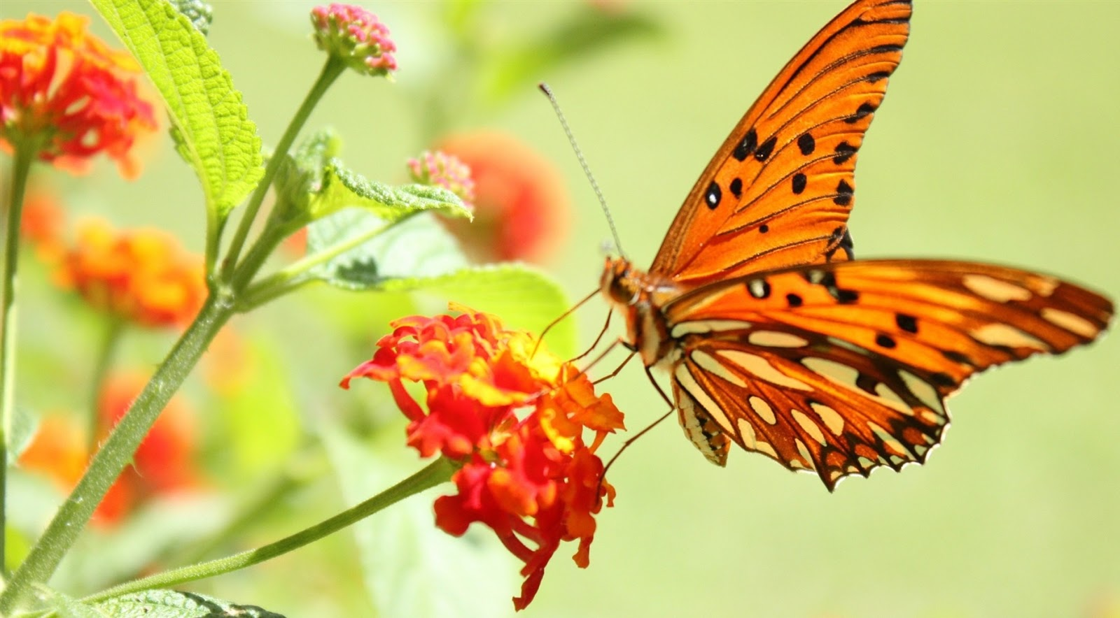 Cute Natural Butterfly Flowers Wallpapers ~ Latest images ...