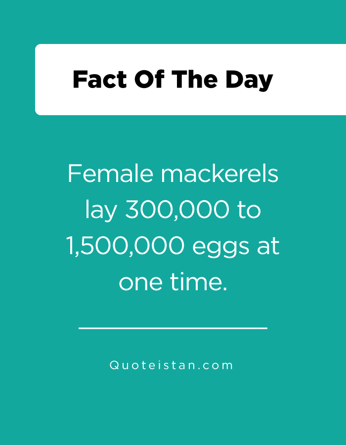 Female mackerels lay 300,000 to 1,500,000 eggs at one time.