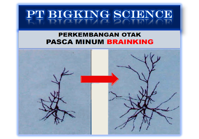 Brainking Plus Online 08123 01 8900