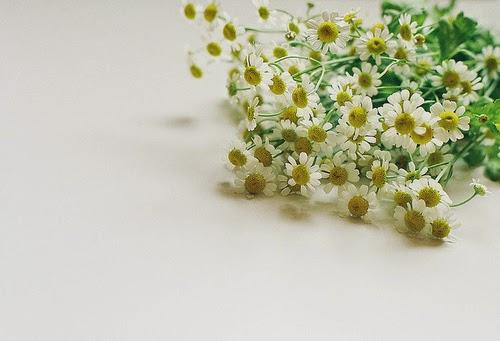 Hoa cúc có buồn như mắt em không