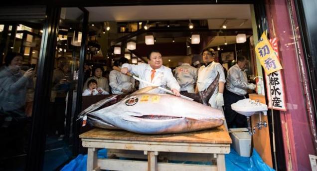 Wow! Seekor Ikan Tuna Terjual Rp 8,5 Miliar dalam Lelang di Tokyo