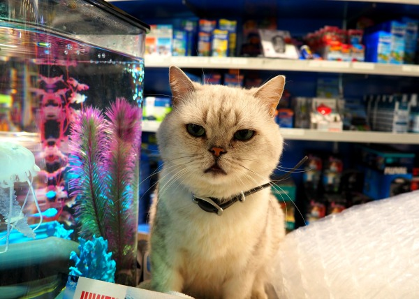 pet store paris