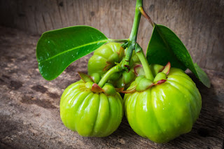 Garcinia-Cambogia-and-weight-loss