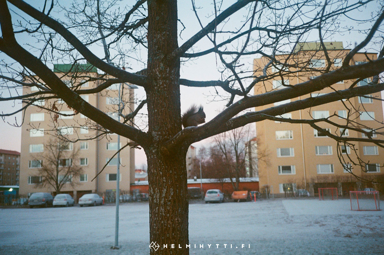 filmikuva-orava