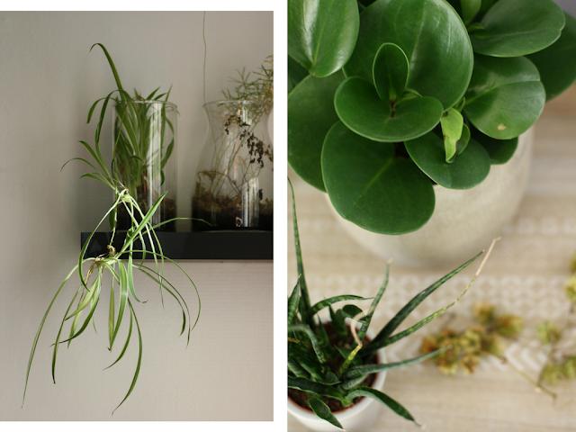 plantes vertes a la maison interieur