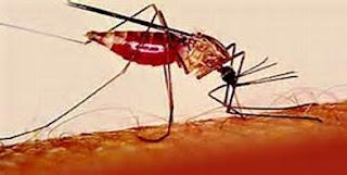 Waspada!! 7 Tips Agar Rumah Bebas Virus Zika dan Demam Berdarah