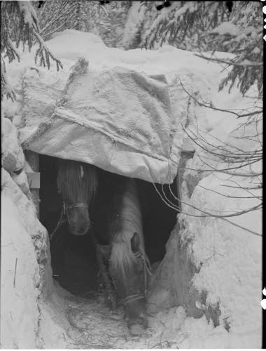 7 December 1939  worldwartwo.filminspector.com Finnish horses