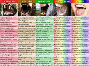 Veganların Kafası Çalışmaz Mı ?