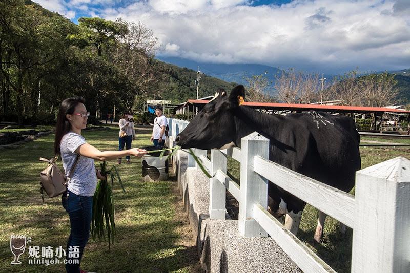 【花蓮瑞穗景點】瑞穗牧場。乳牛餵食親子同樂趣味高