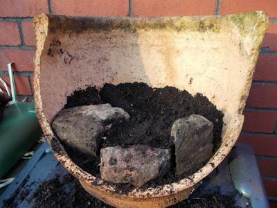 Mini alpine garden in recycled broken pot Green Fingered Blog