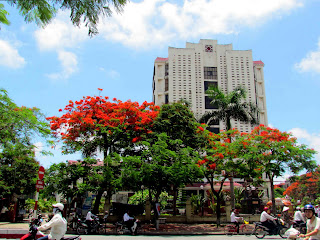 Haiphong città Vietnam Red Flamboyan