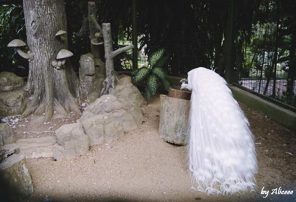 parcul-cu-pasari-Kuala-Lampur