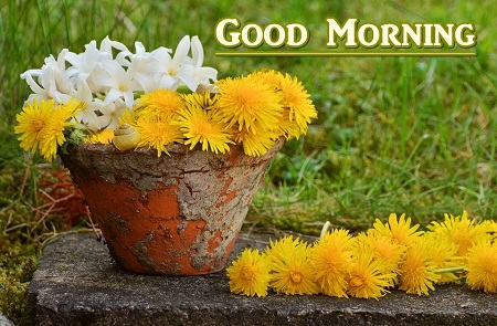 Good Morning Flower Images Wallpaper Pictures HD