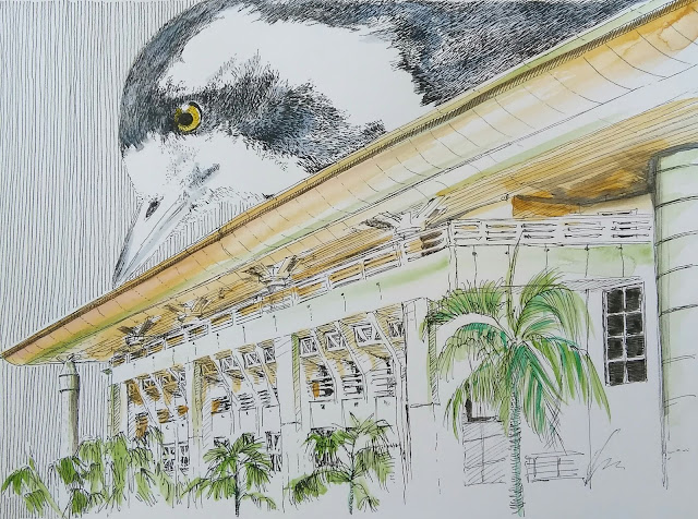 Keeping Watch, Parliament House, State Square, Darwin, Northern Territory, NT, Australia, Magpie-Lark, David Dalzell, The Wandering Artist