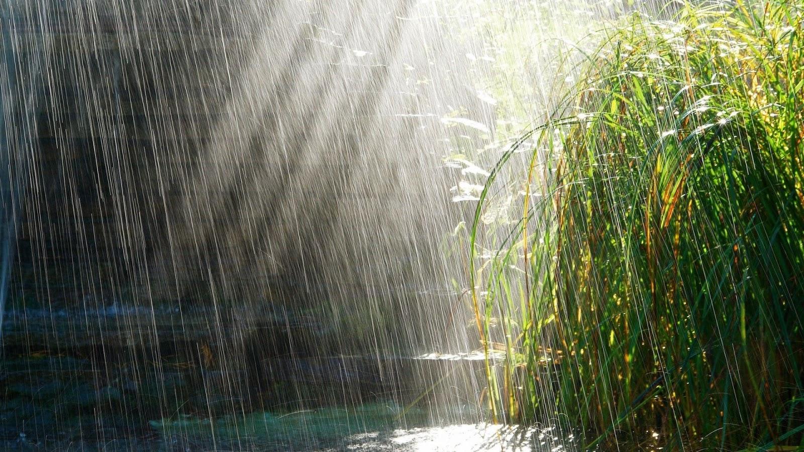 Bộ hình nền máy tính về mưa tuyệt đẹp đầy huyền ảo