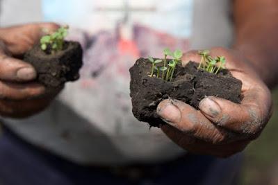Agriculture à Madagascar : entre le succès du microcrédit et le risque climatique