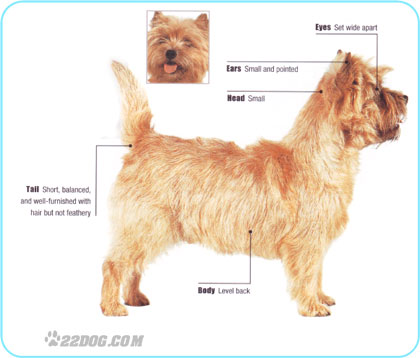 Your cairn groom strip