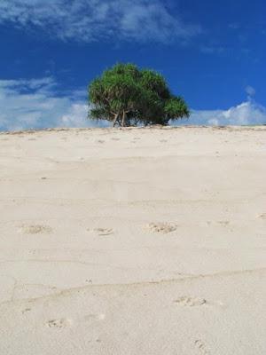 Sebatang pohon di pantai Boa
