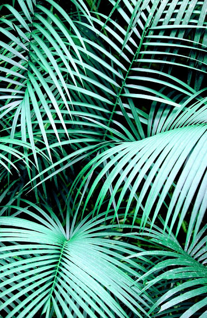Green palms - ffffound nature - beautiful photography