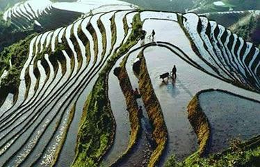 cultivando terrazas de arroz en las montañas chinas