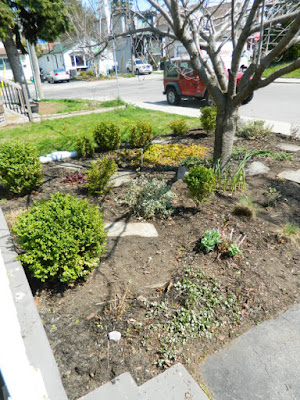 Birch Cliff Toronto spring garden clean up after Paul Jung Gardening Services