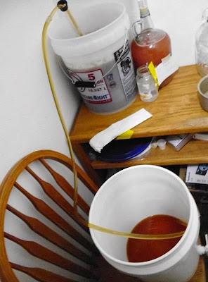 Siphoning IPA to bottling bucket