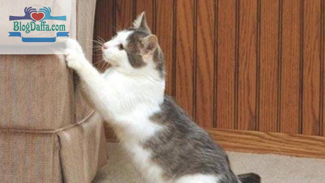 Kenapa kucing suka Mencakar sesuatu