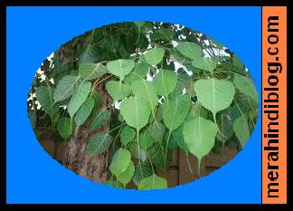 पूर्वजों से आशीर्वाद पाने के लिए क्यों और क्या करें? Puravjon ka aashirwad kaise payen