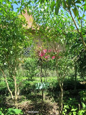 dye garden, Ubud Bali