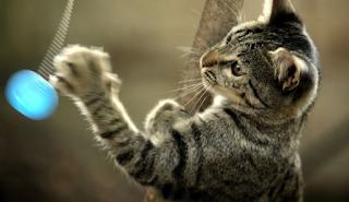 Πανελλήνια οργή: Σκοτώνει γάτες και δίνει συνταγές για φόλες στο Facebook