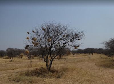 il recinto dei ghepardi del cheetah conservation fund