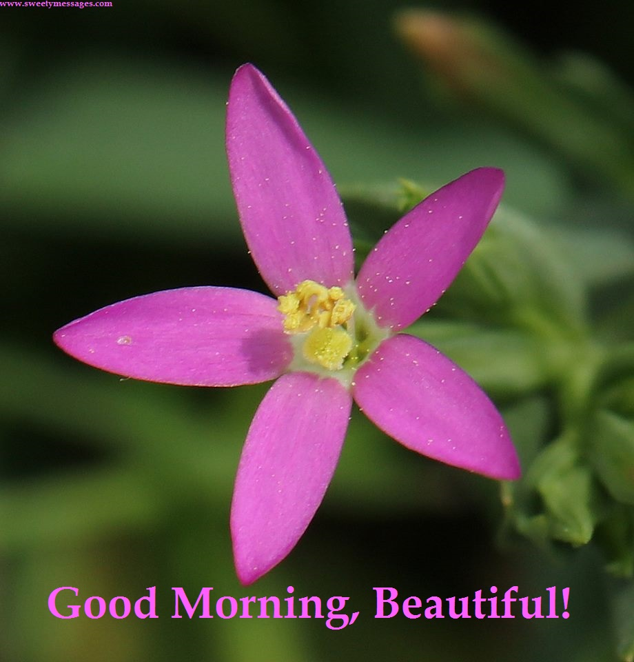 Good Morning Beautiful Pictures : Good morning love beautiful messages