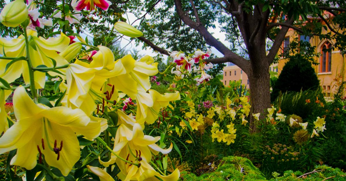 Walking To Allen Centennial Gardens >> Wisconsin Explorer Allen Centennial Gardens Uw Madison